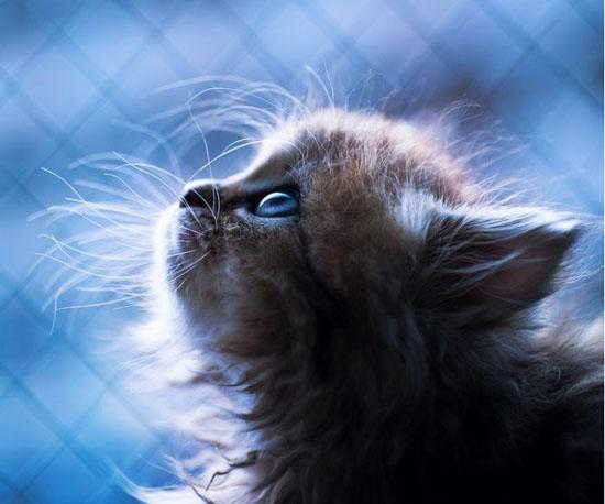 萌宠图片第5期:一只名叫黛西的小猫