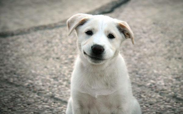萌宠图片第37期:汪星人的微笑