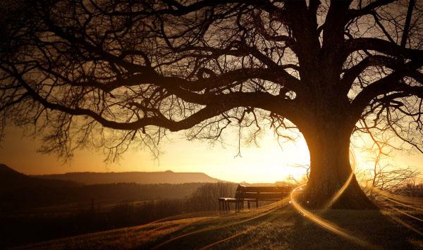 唯美摄影:如果有来生,我要做一棵树