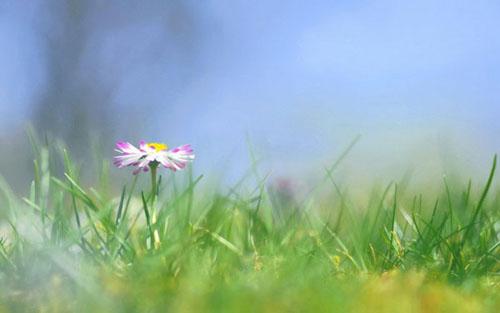 经典散文:拈一朵琼花,便过了沧海