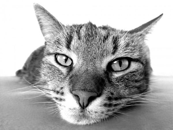萌宠图片第44期:可爱的猫咪