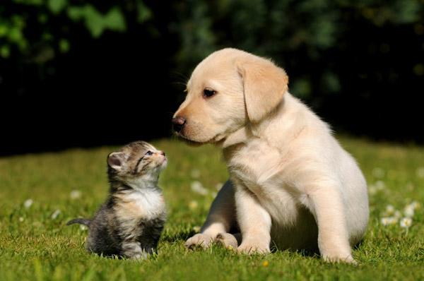 萌宠图片第45期:猫与狗的友谊