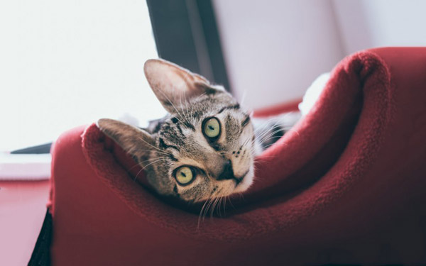 萌宠图片第49期:呆萌可爱的猫咪