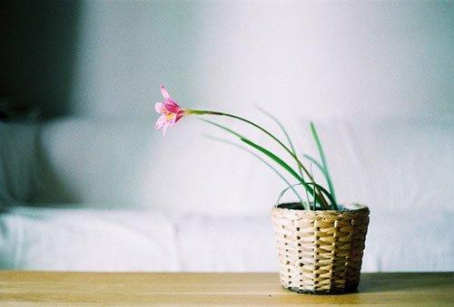 小清新图片:与安静相关的唯美意境图