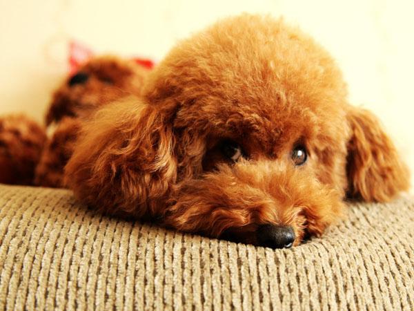 萌宠图片第68期:第二聪明的狗狗