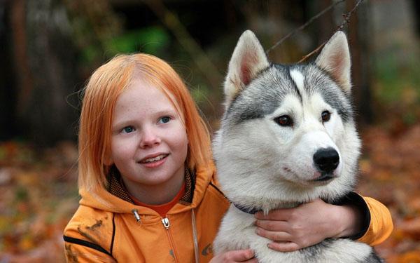 萌宠图片第69期:雪橇犬