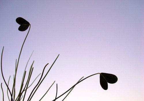 心灵鸡汤:安静之美