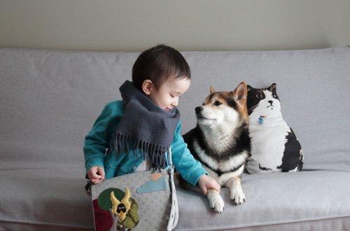 萌宠图片第72期:一茶与柴犬Maru的幸福生活