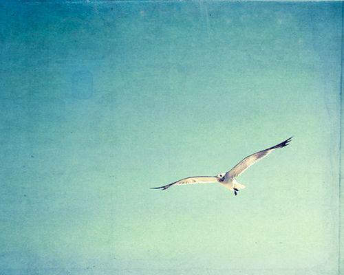 唯美图片:鼓舞自己插上腾飞的翅膀,带着理想奋勇翱翔,飞向希望