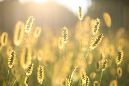 早安心语:我要的,不是短暂的温柔,而是一生的守候