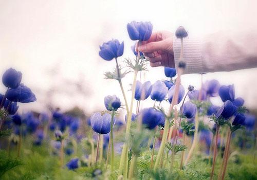 张爱玲经典爱情语录:因为爱过,所以慈悲;因为懂得,所以宽容