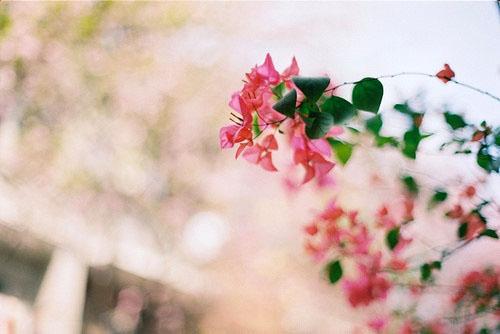 励志文章:我要用全身心的爱来迎接今天