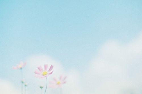 早安心语:对你笑的人很多。真心对你,包容你一切的,太少