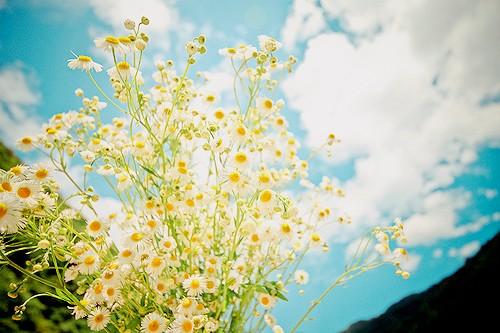 人生如梦,岁月无情,蓦然回首,才发现人活着是一种心情