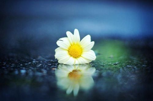 早安心语:学会与自己的伤痛和平共处,这就是成长的意义