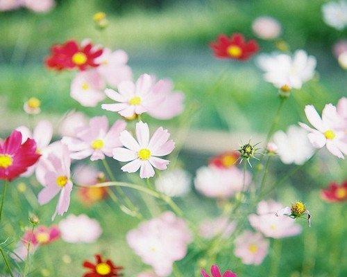 晚安心语:一瞬间,看尽繁华。繁花,只一眼,便是天涯