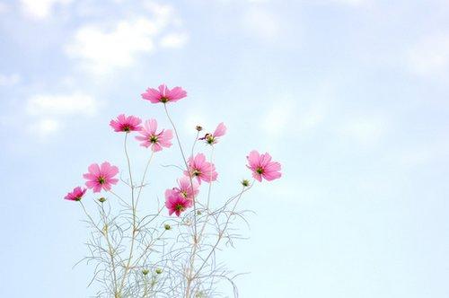 早安心语:梦想是用来被追逐的,而不是用来被幻想的