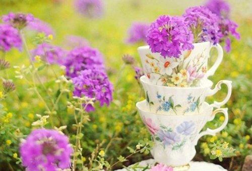 早安心语:闲看花开,静待花落,冷暖自知,干净如始
