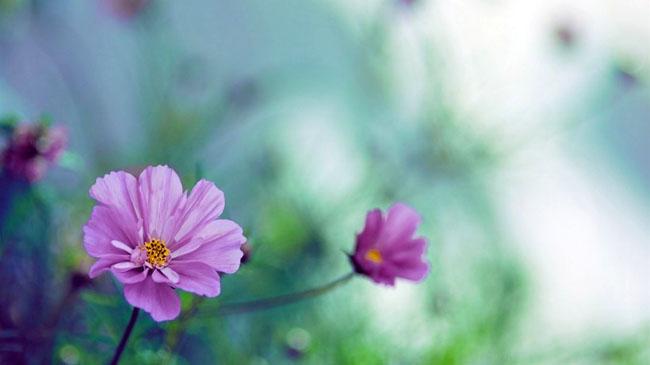 那些花儿:紫色花(第85期)