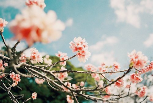 早安心语:人生是不能靠心情而活着,而是要靠你的心态去生活