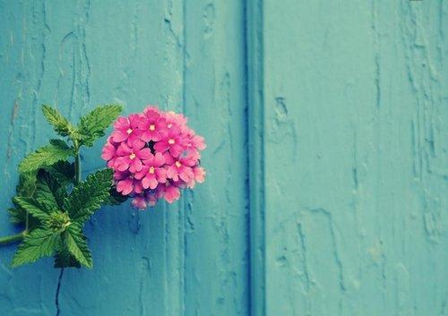 晚安心语:给生命一个微笑,放手过去,享受现在,拥抱未来