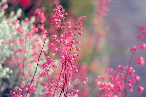 早安心语:我开始喜欢最初的自己,那时没有伤,不会哭泣