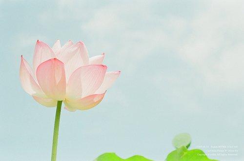 早安心语:时光永远不会逆行,把握好每一个属于自己的清晨