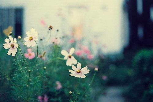 早安心语:花开终是落,花落终成空,无需留恋,随遇而安