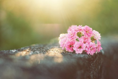 晚安心语:不要放弃做自己,人生很短,根本没时间模仿别人