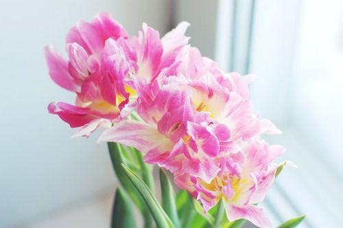 晚安心语:以平常心看世界,花开花谢都是风景
