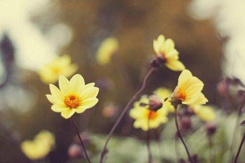 早安心语:你不是要做一个单纯优秀的人,而是要做一个不可替代的人