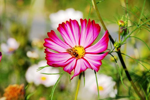 那些花儿:只要找到了八瓣格桑花,就找到了幸福