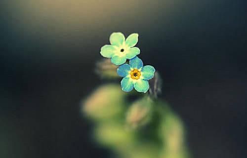 爱情语录:恋爱中的人,总有一方是花园,另一方是园丁