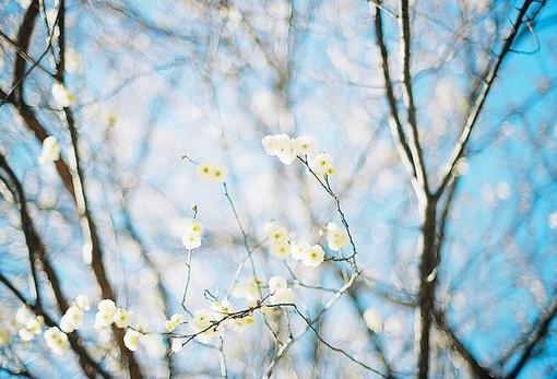 早安心语:忘不掉的是回忆,继续的是生活,错过的,那么就当是路过