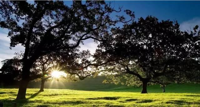 又是新的一天,请带上阳光和微笑