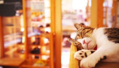 晚安心语:无论在什么时候,无论在什么地方,我们都不要抱怨我们自己的人生