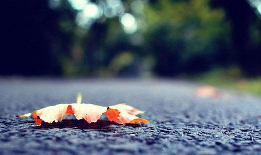 晚安心语:浮生若梦,浮尘如空,为欢几何,百转千折