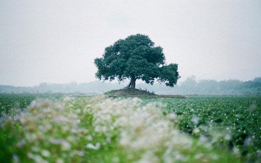 早安心语:那些我们忘不掉的是回忆,继续的才是生活。错过的,就遗失在远方