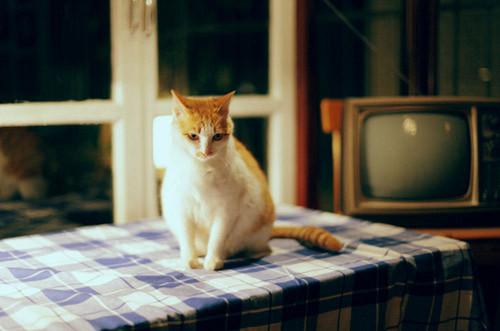 晚安心语:因为孤独是生命的常态,所以陪伴才显得格外珍贵