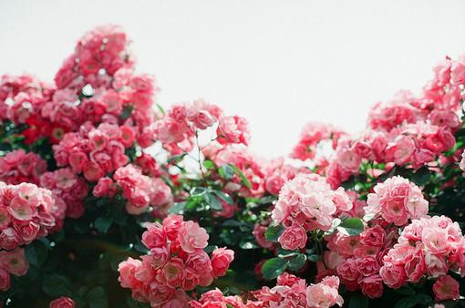 苦和甜来自外界,坚强则来自内心,来自一个人的自我努力