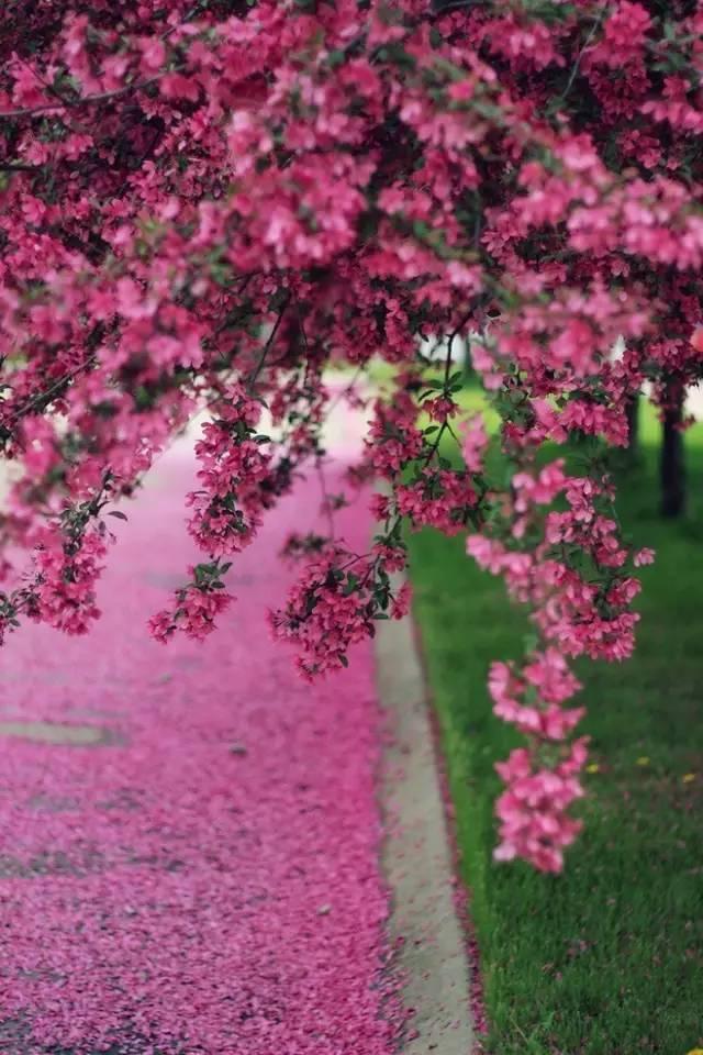 一路向暖,春暖花开(好美)