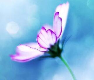 晚安心语:人生艰难,但是如果你有笑对人生的能力,你就有享受人生的能力