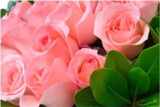 世上最美的情感,不是我爱你,是我……