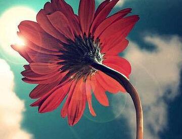 早安心语:再不提起过去,痛苦或幸福,生不带来,死不带去