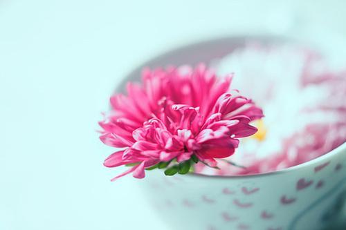 生活,没有模板,只需心灯一盏,烦时,找找乐,别丢了幸福(温馨优美的小清新语录句子)