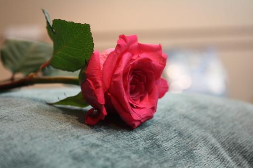 你不是担心没有人爱你,你担心的是没有人用你要的方式爱你(治愈系小清新伤感语录句子)