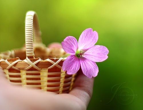 所谓幸福,是在于认清一个人的限度而安于这个限度(情感美文句子)
