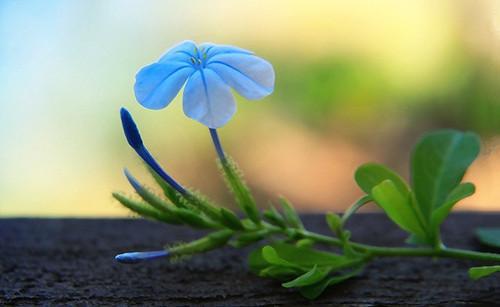 许多事情越想努力做好效果就越糟,比如爱情、入睡和举止自然(优美爱情句子)