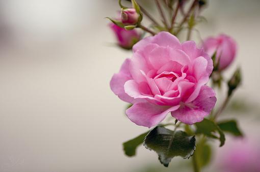 最深沉的爱,莫过于你离开以后,我活成你了你的样子(安慰受伤心灵的经典语录句子)
