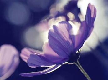 唯美早安心语:时光静好,与君语;细水流年,与君同;繁华落尽,与君老